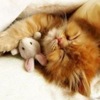 Kitten cuddling with toy