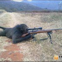 Monkey Sniper
