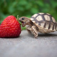 Morning NOM: turtle