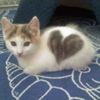 Morning cute: Kitten <3