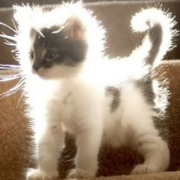 Static electricity cat