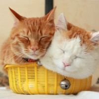 Two cats share a basket