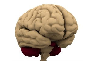 Brain Exercises For Optimum Brain Health