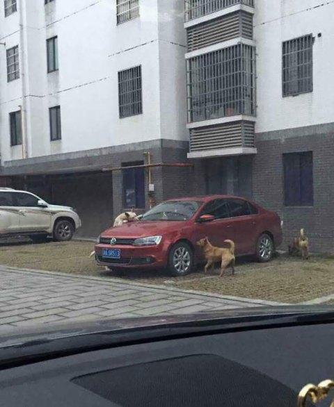 stray-dog-revenge-3