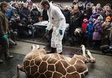 giraffekill