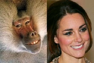 The baboon is on the left.