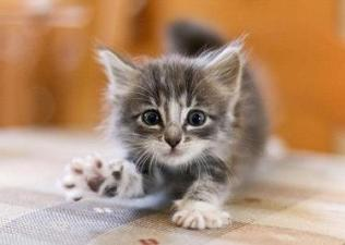 rsz_adorable-baby-cat-cute-kitten-favim_com-284524