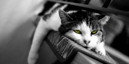 bored_cat