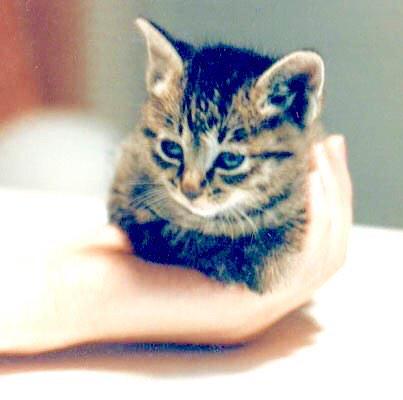 可愛い,動物,animal,癒し,画像,まとめ626
