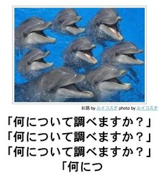 bokete, おもしろ, まとめ, ボケて, 爆笑, 画像1134