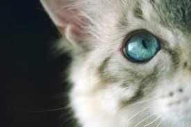 うっとり,猫,まん丸,目,美しすぎる,画像040