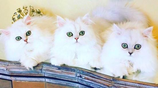 うっとり,猫,まん丸,目,美しすぎる,画像089