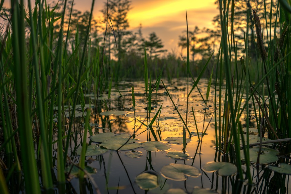 The Everglades Restoration Transition Plan (ERTP)