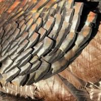 The Turkey Harvest