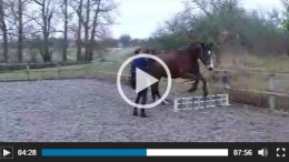 Jumping on the Lunge with Ellen Terray