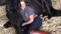 Housing Stallions with Lara Dyson
