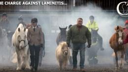 CARE Study Update - Laminitis