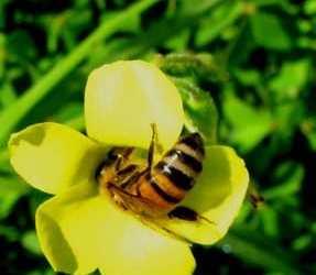 Εφαρμογή στη Μελισσοκομία