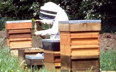 Πράσινο φως» για εκπαιδεύσεις μελισσοκόμων και Κέντρα Μελισσοκομίας
