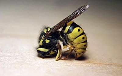 Πρώτες βοήθειες για τσίμπημα μέλισσας, σφήκας ή σφίγγας ή σφήγκας