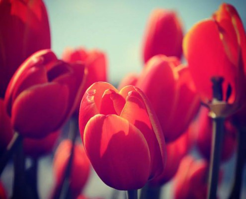 Spring contest