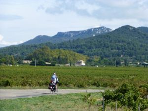 Through the Gigondas vineyards enroute to Vaison la Romaine