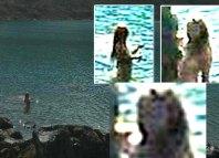 Turista argentino de paseo por Perú afirma haber fotografiado una sirena. Crédito: Diario Correo