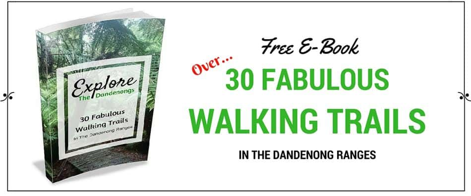 Free Ebook Walkins in the Dandenong Ranges
