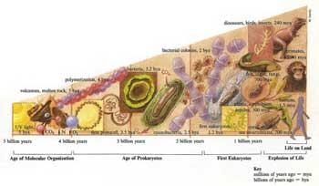 Fatos controversos sobre a Evolução