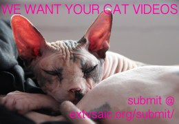 WE WANT YOUR CAT VIDEOS