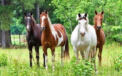 Weide / Onderwerp weiland / Verzorging paard | Informatievoorpaardenliefhebbers.jouwweb.nl