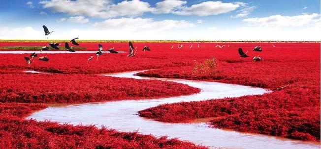 Den røde strand Panjiin Kina