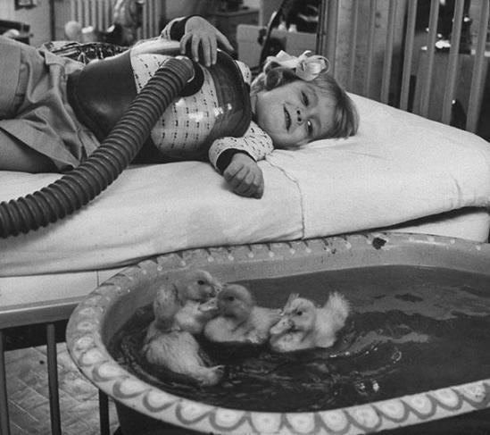 Dyr brukt som terapi, 1956