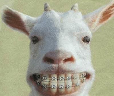 tips penjagaan gigi, gigi besi, gigi yang cantik , kambing pakai gigi besi