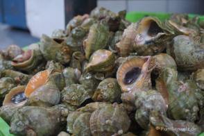 Auf dem Fischmarkt auf Chiloé