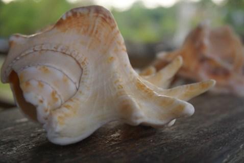 Muschelfunde