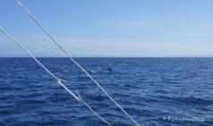 Delfine auf dem Weg nach Calangaman