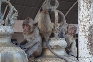 Elefanten, Strand und wilde Affen - Am Monkey Hill Temple