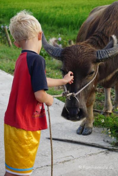 Begegnung mit dem Wasserbüffel