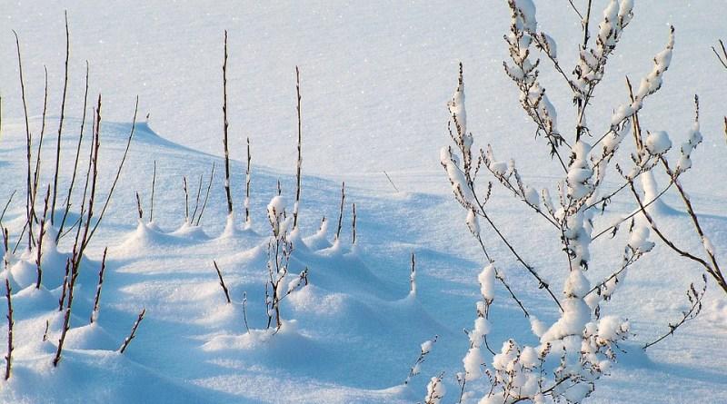 winterwinter