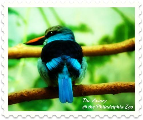 kingfisher-philadelphia-zoo