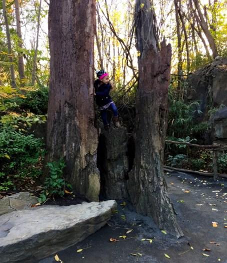 Bronx Zoo Congo exhibit, enjoying the empty park