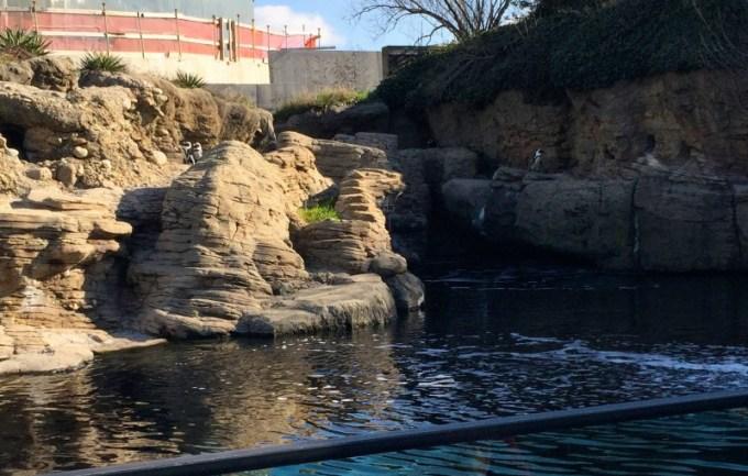 NY Aquarium Sea Cliffs penguins