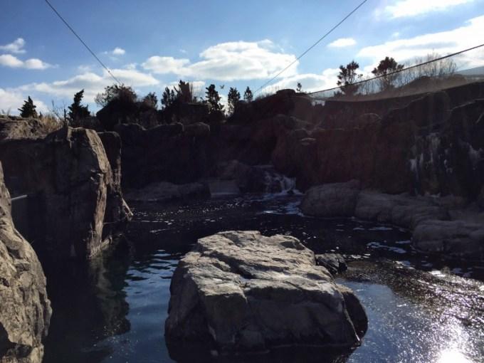 NY Aquarium Sea Cliffs