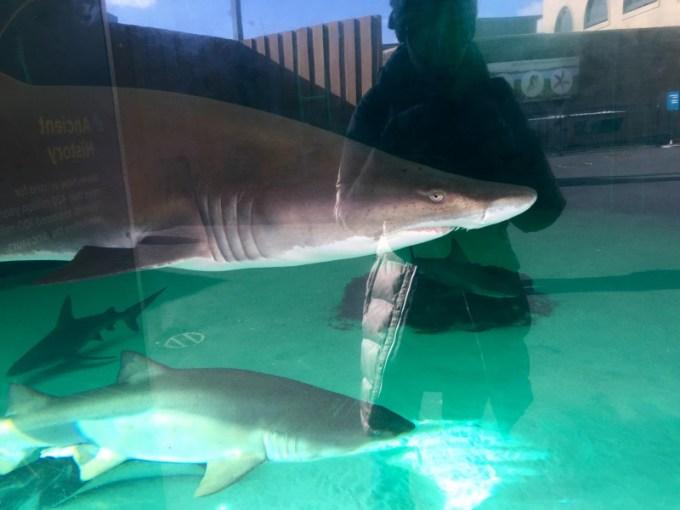 NY Aquarium Shark Tank