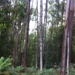 Adventure in Fangorn Forest
