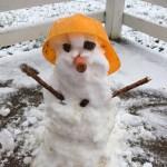 Snow at Fangorn Farm!