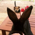 Keeping Rabbits for meat