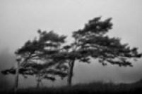 Danca dos ventos