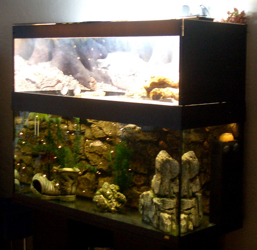 Tank Basking Platform   Indoor Setups.Aquariums and Tubs   Turtle